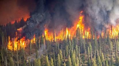 Perché Putin ha dovuto affrontare la questione della revisione del Codice forestale della Federazione Russa