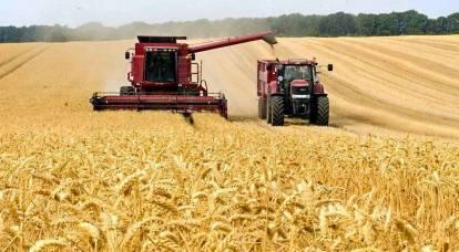 """O fracassado """"poder agrário"""" busca formas de resolver a escassez de trigo"""