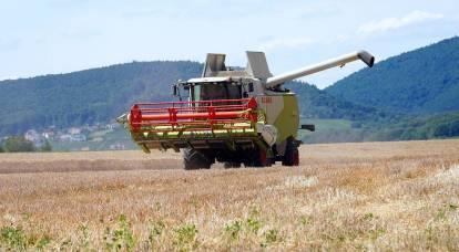 Un insidioso parassita minaccia il raccolto russo