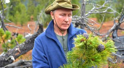 What could be the turn of Putin's attempt to save the Russian forest from destruction