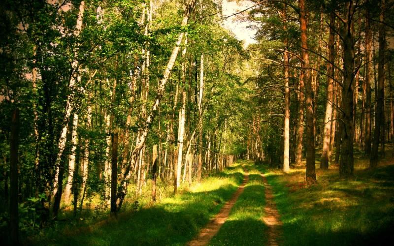 Путин защитил российский лес специальным законом