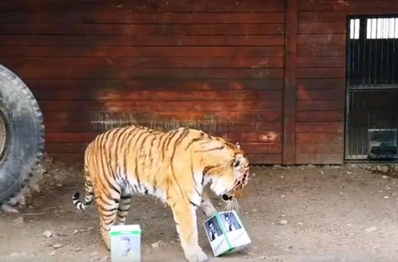 Российский тигр Бартек предсказал победителя на выборах президента Украины
